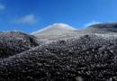 Etna, Cratere di Nordest: lo spettacolo dell'insolita galaverna d'ottobre. Cos'è e come si forma